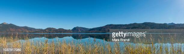 Panorama, view over the lake with reeds, water reflection, Walchensee, Upper Bavaria, Bavaria, Germany