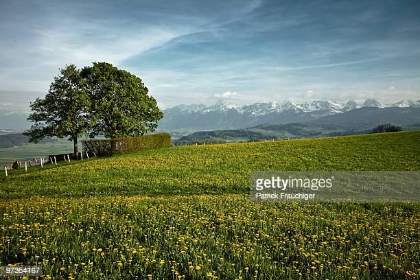 Panorama with Tree
