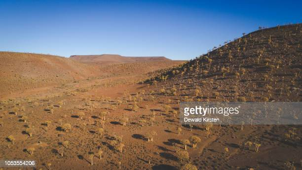 panoramic aerial views over the quiver tree forest in nieuwoudville in the northern cape of south africa - ナマクワランド ストックフォトと画像