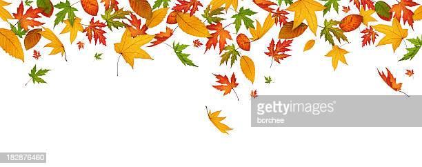 パノラマに広がる秋の葉