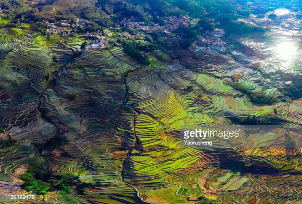 panoramic drone view of yuanyang rice terraces at yunnan province,china - yuanyang stock pictures, royalty-free photos & images