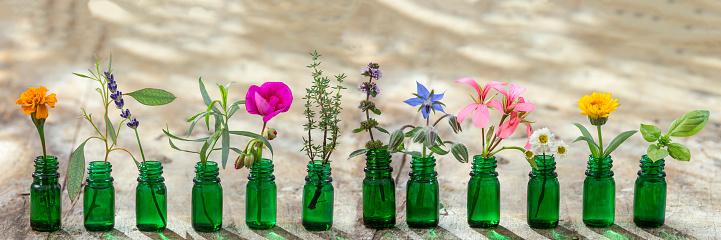 panoramic green essential oil bottle, and flowers cornflower, geranium, lavender, mint, oregano, rosemary, marigold, thyme, basil, bourache, chamomile, tarragon, eucaliptus, granium, lavender, mint, carnation turkey, marigolds, 1080926714