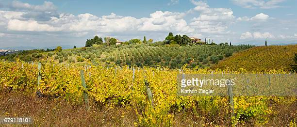 panoramic image of vineyard in tuscany, italy - chianti region stock photos and pictures