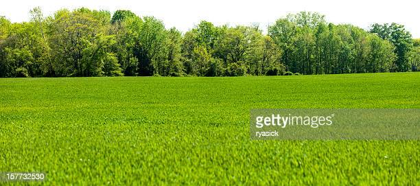 Panoramic Isolated Springtime Tree line with Grass Field Foreground