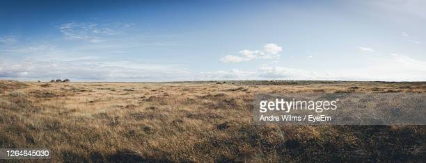 panoramic landscape in the north of germany. - 荒野 ストックフォトと画像