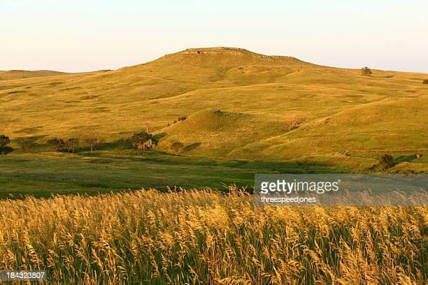 Panoramic landscape of wheat fields in Nebraska