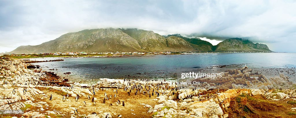 Panoramic landscape with penguins : Stock Photo