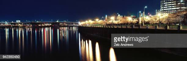 panoramic night view of cherry blossoms in portland, oregon - burnside bridge portland stock photos and pictures