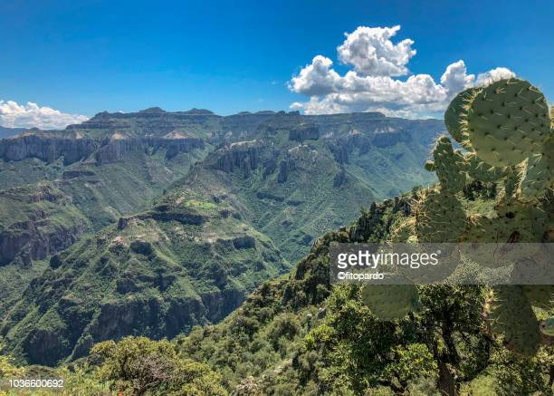 panoramic of the copper canyon - chihuahua desert stock pictures, royalty-free photos & images