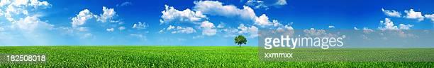 Vue panoramique meadow