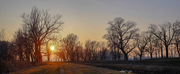 Panoramic shot of bare trees on landscape at sunset