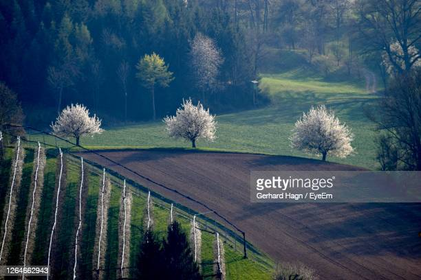 panoramic shot of blooming trees near forest and fields - gerhard hagn stock-fotos und bilder