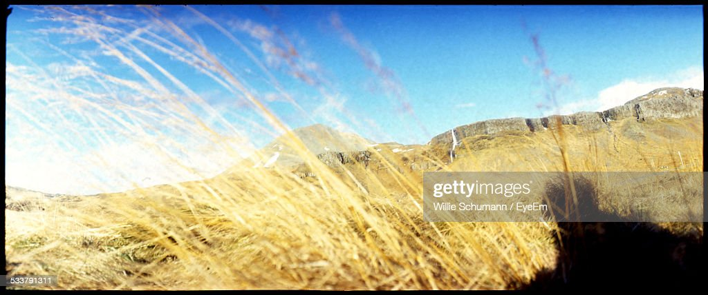 Panoramic Shot Of Grassy Field Against Clear Blue Sky : Foto stock