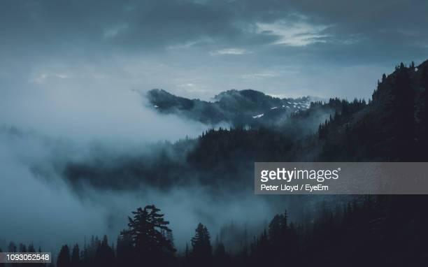 panoramic shot of silhouette trees against sky during foggy weather - olympic park stock pictures, royalty-free photos & images