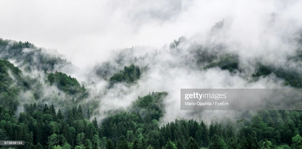 Panoramic Shot Of Trees In Forest Against Sky : Stock-Foto