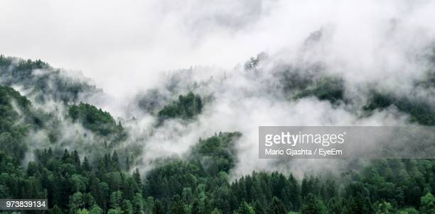 panoramic shot of trees in forest against sky - fog stock pictures, royalty-free photos & images