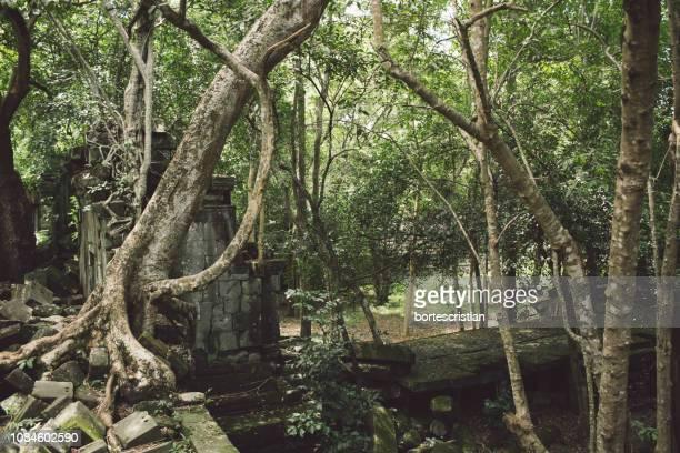 panoramic shot of trees in forest - bortes fotografías e imágenes de stock
