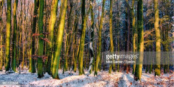 panoramic shot of trees in forest - pomorskie province stock photos and pictures
