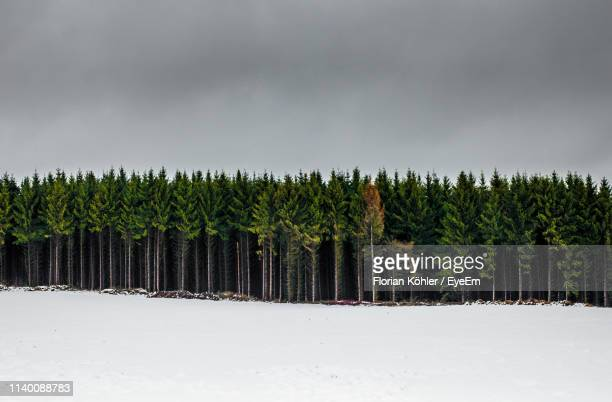 panoramic shot of trees on field against sky - treelined stock pictures, royalty-free photos & images
