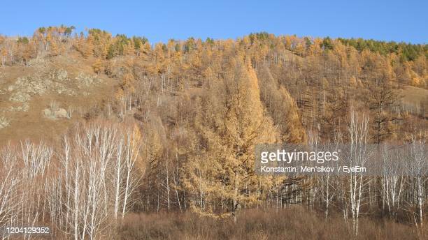 panoramic shot of trees on field against sky - men stockfoto's en -beelden