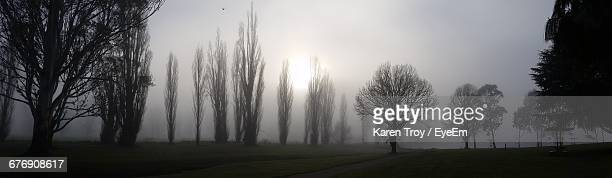 Panoramic Shot Of Trees On Field In Foggy Weather