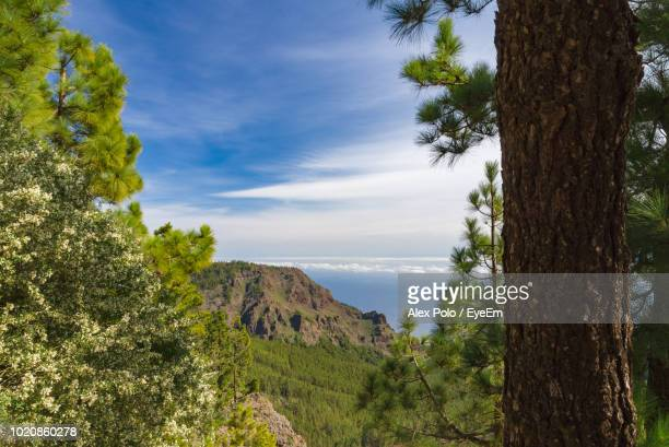 panoramic shot of trees on landscape against sky - atlantic islands stock pictures, royalty-free photos & images