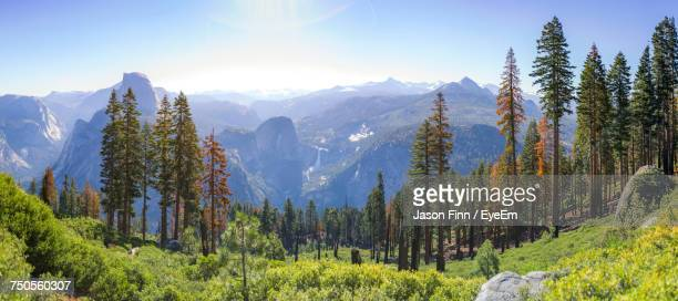 panoramic shot of trees on landscape against sky - wilderness stock pictures, royalty-free photos & images