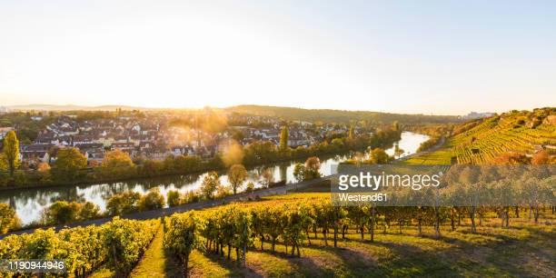 panoramic shot of vineyard against clear sky on sunny day, stuttgart, baden-wrttemberg, germany - ミュンスター市 ストックフォトと画像