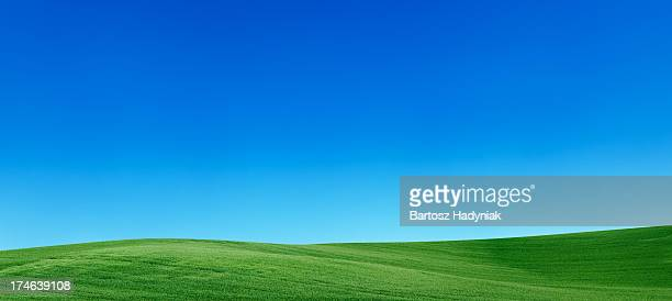 panoramic spring landscape 55mpix  xxxxl meadow, blue sky - heuvel stockfoto's en -beelden