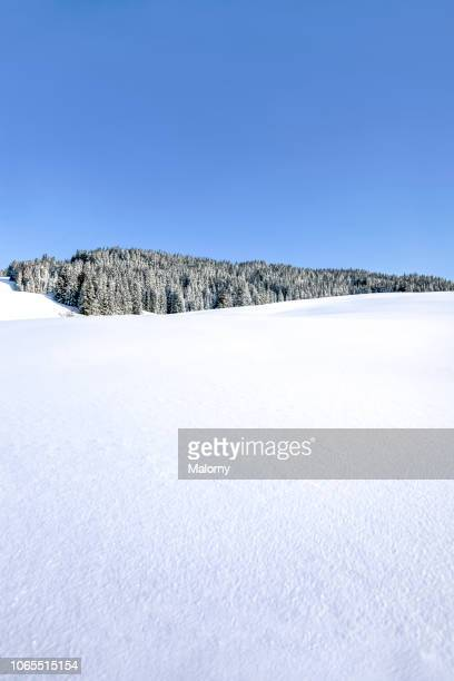 panoramic view at snow-covered landscape and forest in the mountains. fresh snow. blue sky. - deep snow stock pictures, royalty-free photos & images
