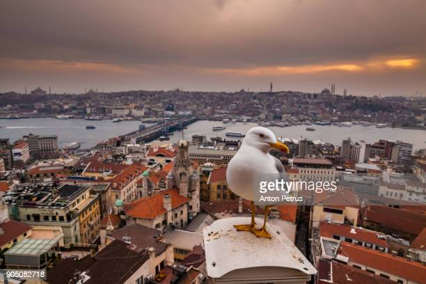 panoramic view from galata tower to golden horn, istanbul, turkey - istanbul province stock photos and pictures
