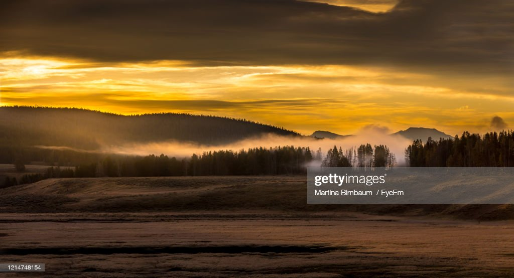 Panoramic View, Geyser Vapor Rising From A Forest, Yellowstone National Park Usa : Stock Photo