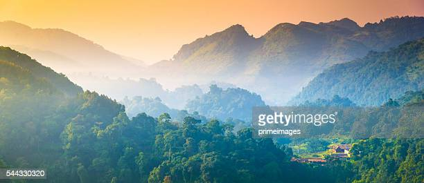 panoramic view misty morning sunrise in mountain at north thailand - tropical tree stock pictures, royalty-free photos & images