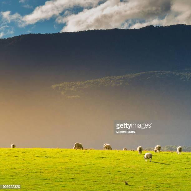 panorama-natur-landschaft in neuseeland südinsel - region otago stock-fotos und bilder
