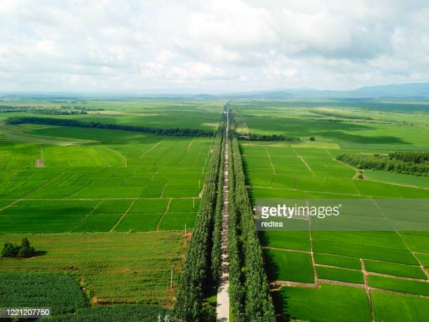 panoramic view nature landscape of a green field with rice - nature reserve stock pictures, royalty-free photos & images