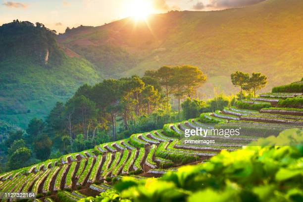 panoramic view nature landscape scenic sunrise and mist on mountain view at the north - thailand stock pictures, royalty-free photos & images