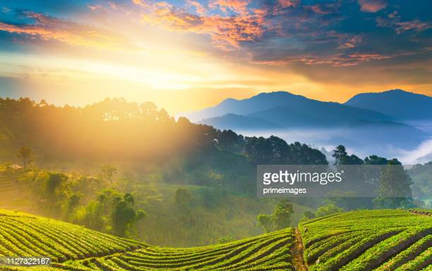 panoramic view nature landscape scenic sunrise and mist on mountain view at the north - provincia di chiang mai foto e immagini stock