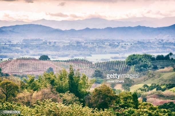 panoramic view of a coffee farm - kolumbien stock-fotos und bilder
