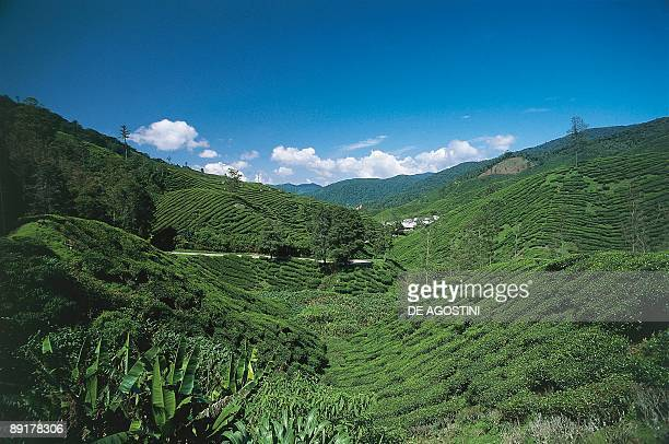 Panoramic view of a landscape Cameron Highlands Pahang Malaysia