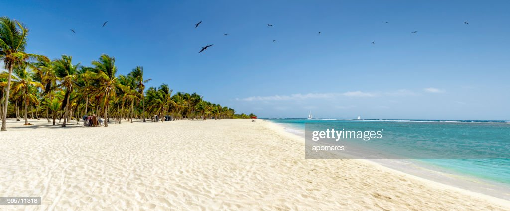 Panoramic view of a white sand beach with coconut trees in the Caribbean sea : Foto stock