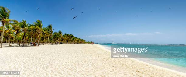 Panoramic view of a white sand beach with coconut trees in the Caribbean sea