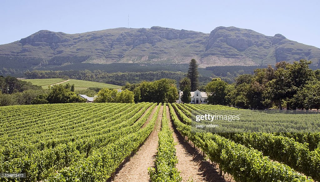 Panoramic view of a winery in South Africa : Stock Photo