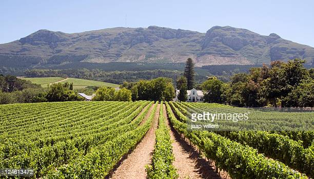 panoramic view of a winery in south africa - south africa stock pictures, royalty-free photos & images