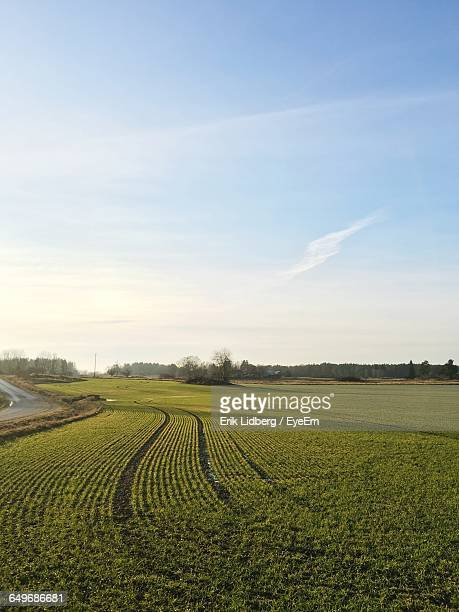 Panoramic View Of Agricultural Field