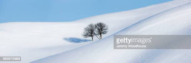 Panoramic view of bare trees on snowy hills