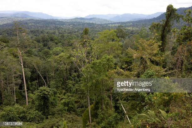 panoramic view of borneo tropical rainforest, borneo - argenberg stock pictures, royalty-free photos & images