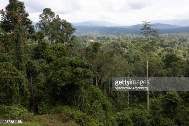 panoramic view of borneo tropical rainforest in maliau basin, sabah, borneo, malaysia - argenberg stock pictures, royalty-free photos & images