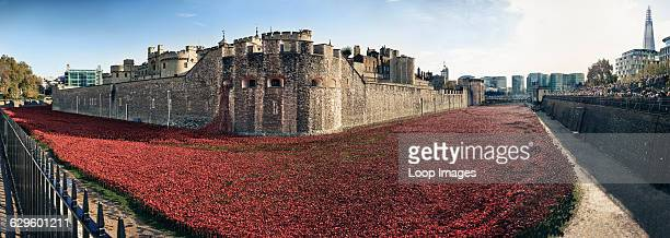 Panoramic view of ceramic poppies at Tower of London to commemorate centenary of WW1, Tower of London, England.