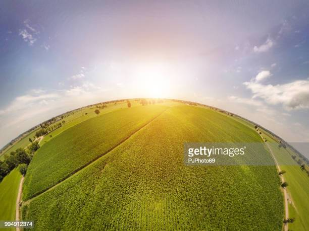 360° panoramic view of corn fields with sunlight