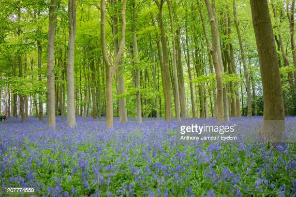 Purple Bamboo Stock Pictures Royalty Free Photos Images Getty